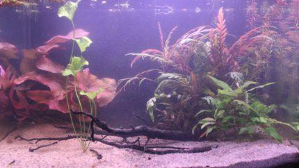 052_biotope-aquarium_e-7-1