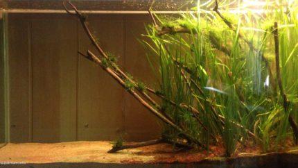 053_biotope-aquarium_e-8-1
