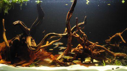 054_2013_biotope_aquarium_sa_14_1