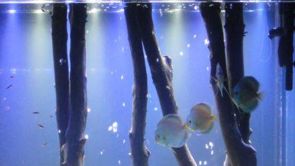 054_biotope-aquarium_sa-15-1