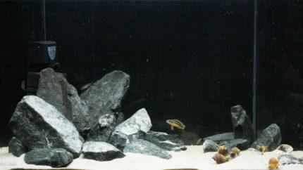 055_2013_biotope_aquarium_a_13_1