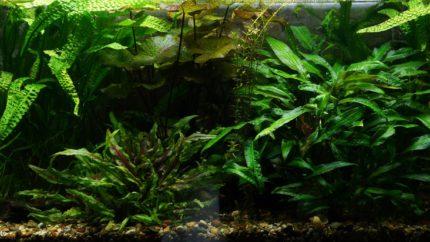 055_biotope-aquarium_e-2-1