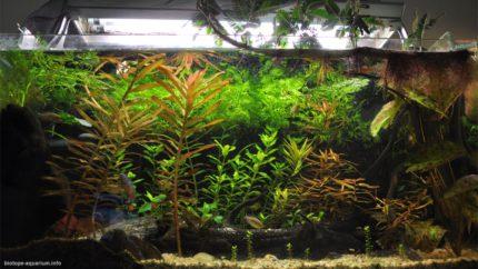 056_2013_biotope_aquarium_a_14_1