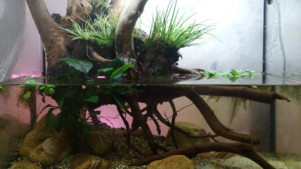 057_2013_biotope_aquarium_a_15_1