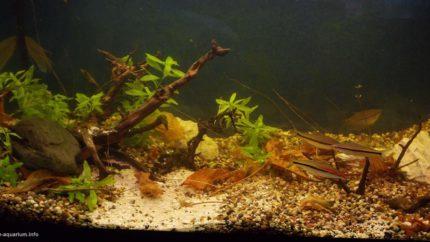 057_biotope-aquarium_e-3-1
