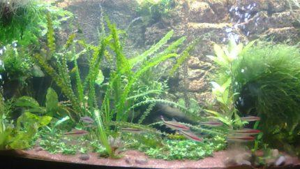 058_biotope-aquarium_e-10-1