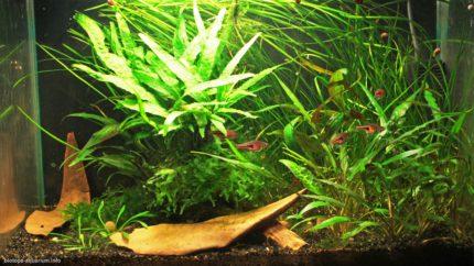 059_2013_biotope_aquarium_e_20_1