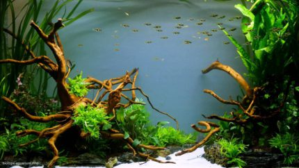 060_2013_biotope_aquarium_e_21_1