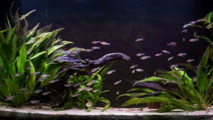 061_2013_biotope_aquarium_sa_16_1