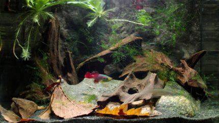 063_2013_biotope_aquarium_a_16_1