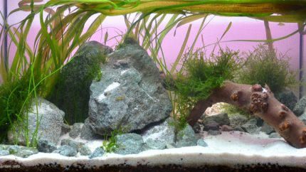 064_2013_biotope_aquarium_e_22_1