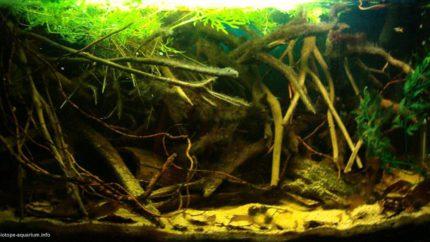 065_2013_biotope_aquarium_sa_18_1