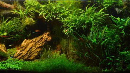 067_2013_biotope_aquarium_e_23_1