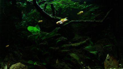 069_2013_biotope_aquarium_a_18_1