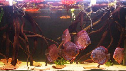 073_2013_biotope_aquarium_sa_21_1