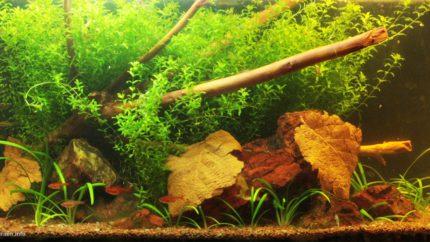 074_2013_biotope_aquarium_sa_22_1