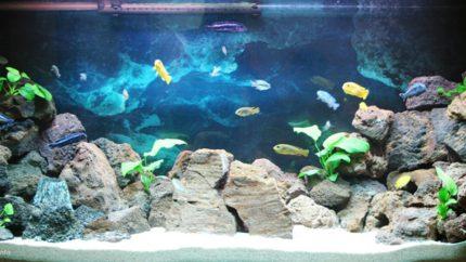 075_2013_biotope_aquarium_a_20_1