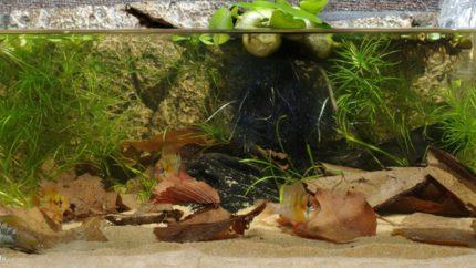076_2013_biotope_aquarium_sa_23_1