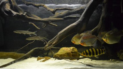 078_2013_biotope_aquarium_sa_24_1