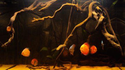 079_2013_biotope_aquarium_sa_25_4