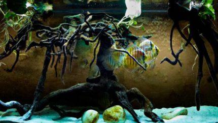 080_2013_biotope_aquarium_sa_26_1