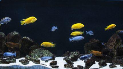 081_2013_biotope_aquarium_a_21_1