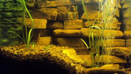 082_2013_biotope_aquarium_e_25_1