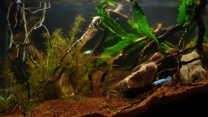 083_2013_biotope_aquarium_e_26_1
