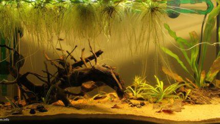 084_2013_biotope_aquarium_sa_27_1