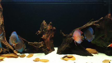 086_2013_biotope_aquarium_sa_28_1