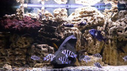 087_2013_biotope_aquarium_a_22_1