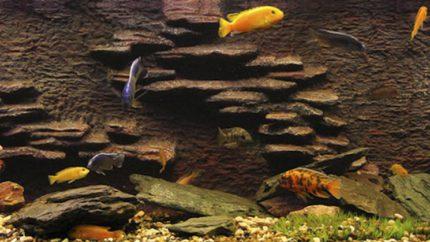 089_2013_biotope_aquarium_a_23_1
