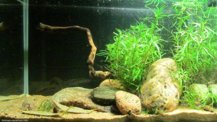 090_2013_biotope_aquarium_sa_30_1