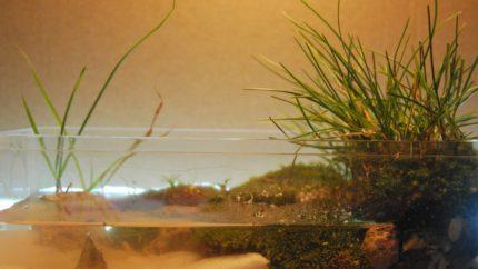 091_2013_biotope_aquarium_e_27_1