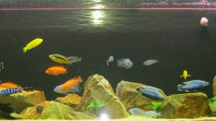 092_2013_biotope_aquarium_a_24_1