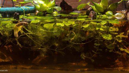 093_2013_biotope_aquarium_e_28_1