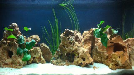 094_2013_biotope_aquarium_a_25_1