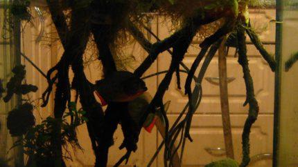 095_2013_biotope_aquarium_sa_31_1