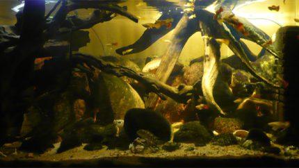 097_2013_biotope_aquarium_a_26_1