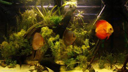098_2013_biotope_aquarium_sa_33_1