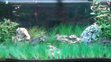 099_2013_biotope_aquarium_sa_34_1