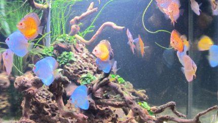 101_2013_biotope_aquarium_sa_35_1