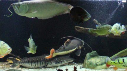 104_2013_biotope_aquarium_sa_37_1