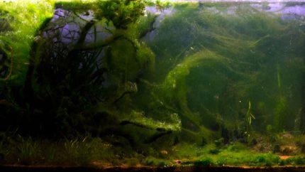106_2013_biotope_aquarium_e_29_1