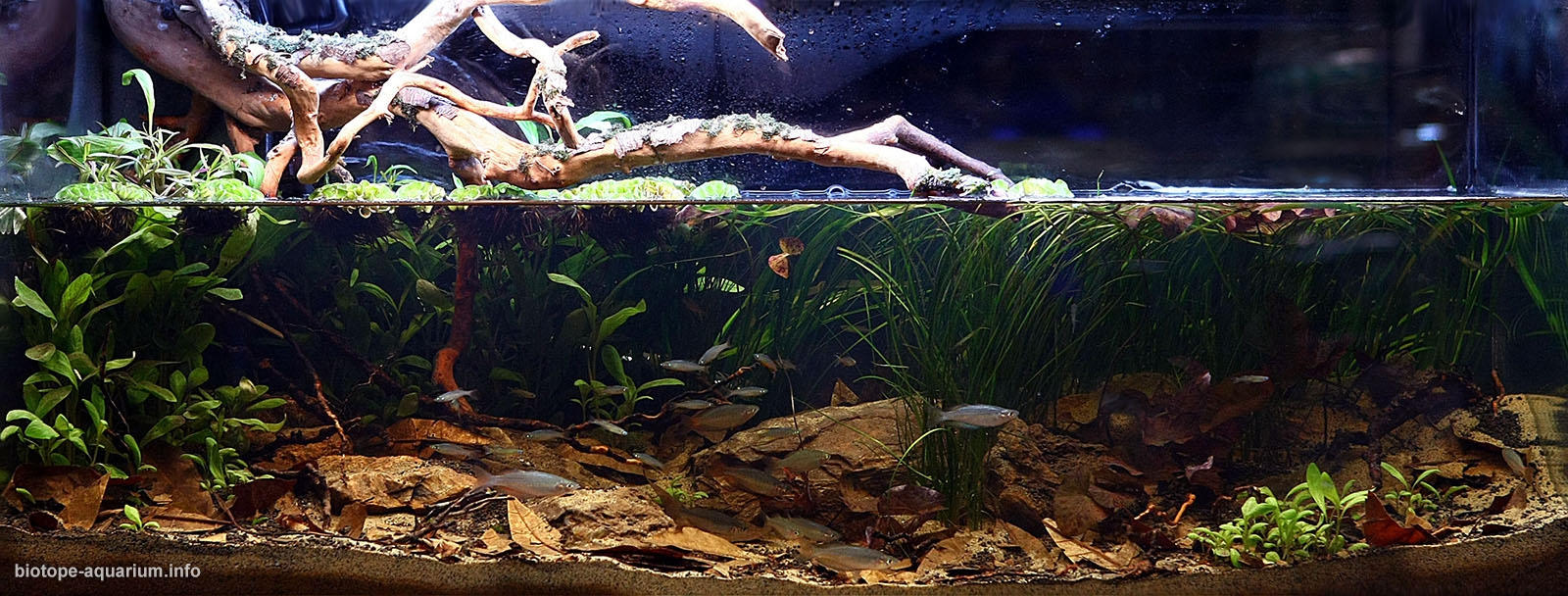 1600-Biotope-aquarium-design-contest-2014-AO