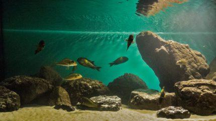 2015_biotope_aquarium_a_10_1