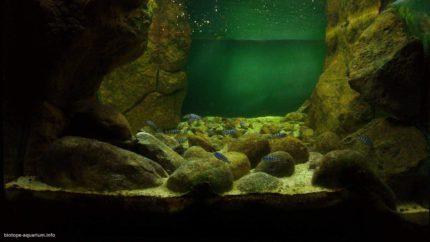 2015_biotope_aquarium_a_18_1