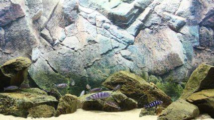 2015_biotope_aquarium_a_1_1