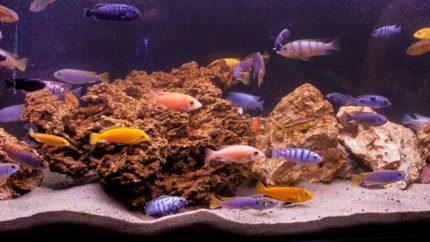2015_biotope_aquarium_a_2_1