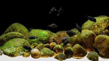 2015_biotope_aquarium_a_3_1